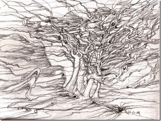 trees-fog-09
